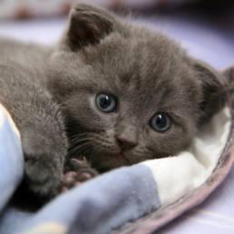 Gattini sul web: perché sono diventati un fenomeno tanto popolare