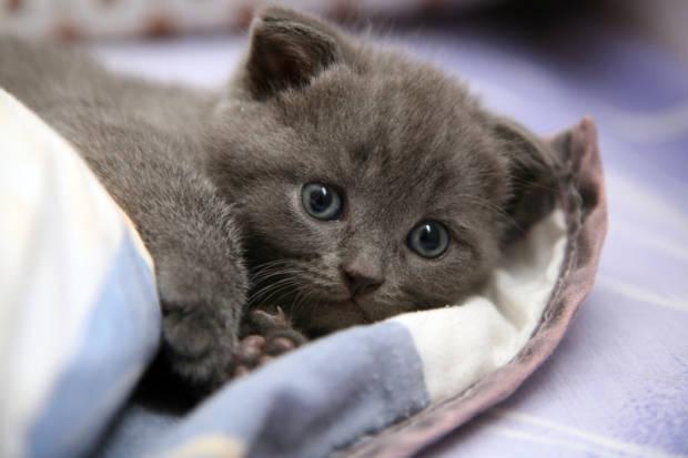 Gattini sul web: come (e perché) nasce un fenomeno social