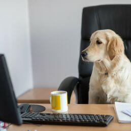 Animali a lavoro e aziende pet-friendly