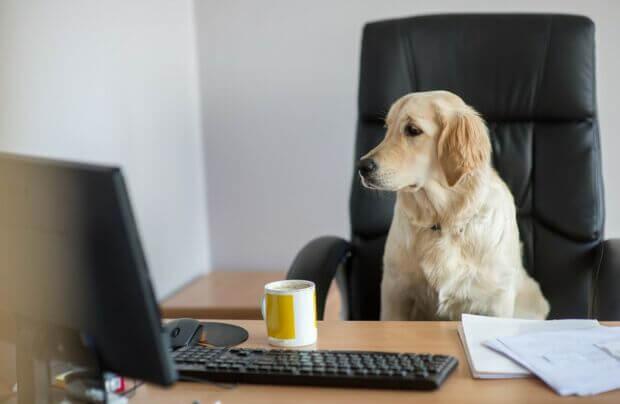 Perché portare gli animali a lavoro? Alcuni esempi di aziende pet-friendly