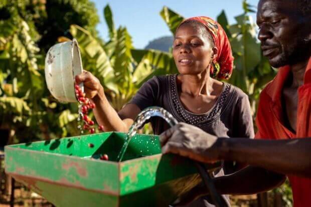Riportare in vita piantagioni di caffè a rischio scomparsa: così è nato il programma di Nespresso