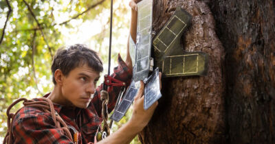 Vecchi cellulari deforestazione