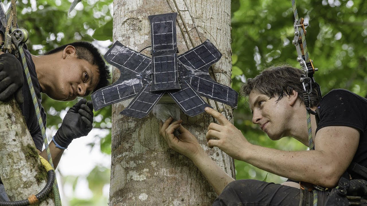 Vecchi cellulari deforestazione. jpg 1