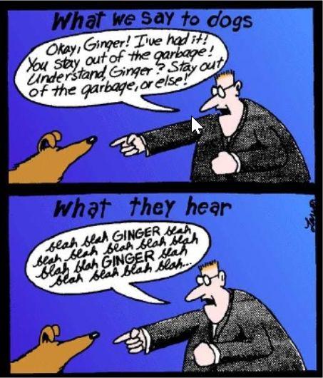 web semantico vs. web tradizionale
