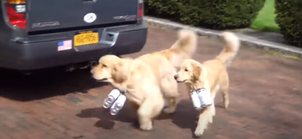 Dog Delivery della Six Harbors Brewery